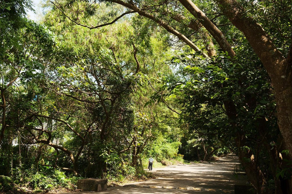 Enormous trees provide much-needed shade during your hike on Lamma
