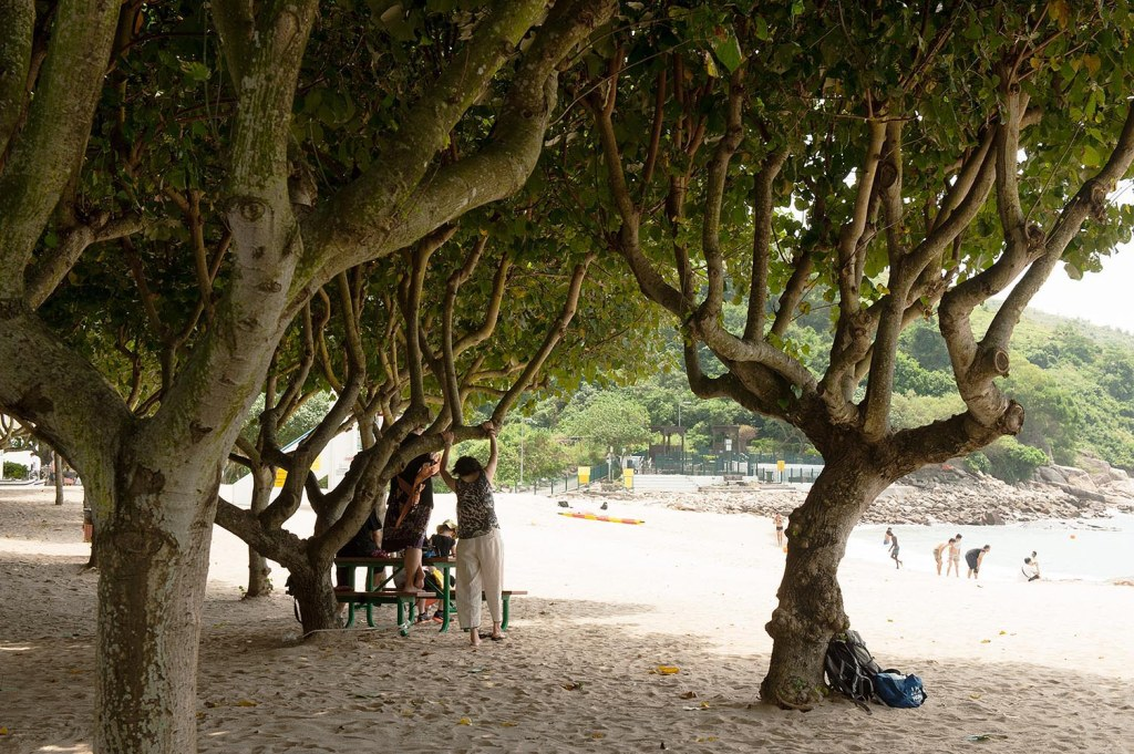 Trees (and visitors) sunbathing on Hung Shing Yeh beach