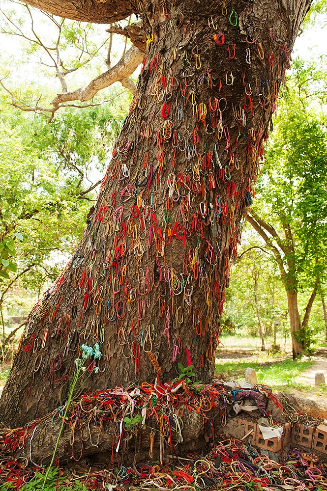 The tree where babies were killed by the Khmer Rouge