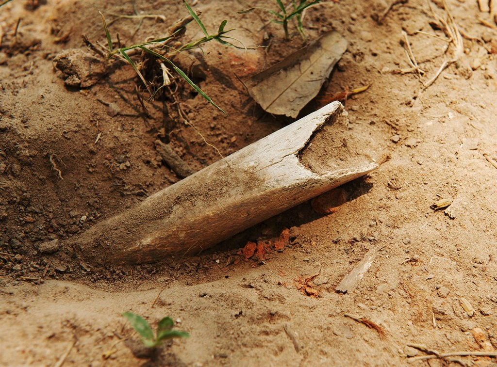A bone shard protrudes from the ground near one of the grave pits