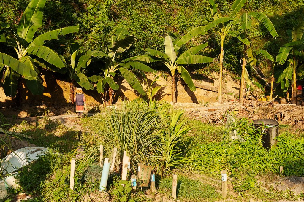 A surprise while exploring Cheung Chau - a working farm with palm trees as a backdrop