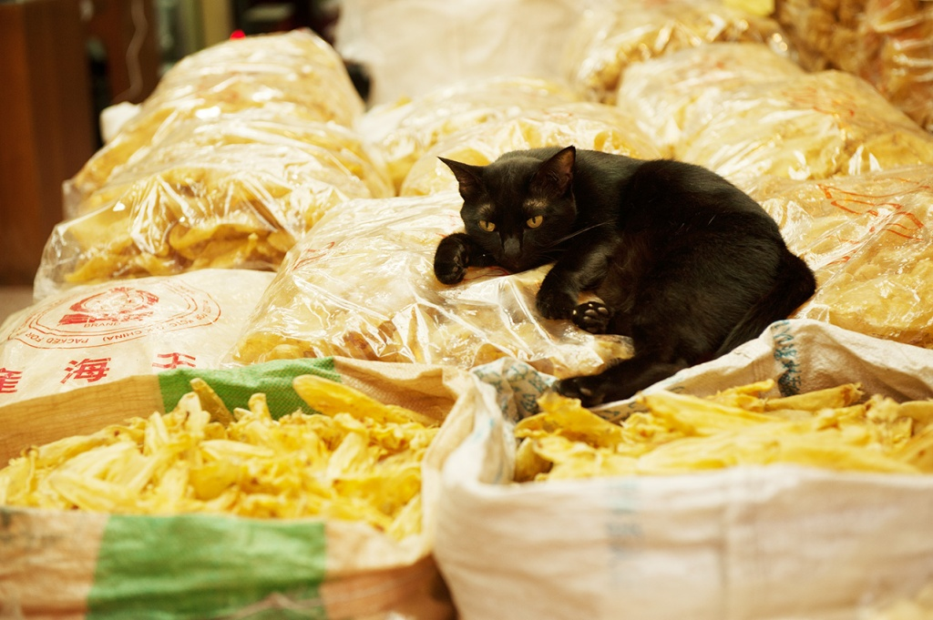 Feline relaxation on dried fish in HK