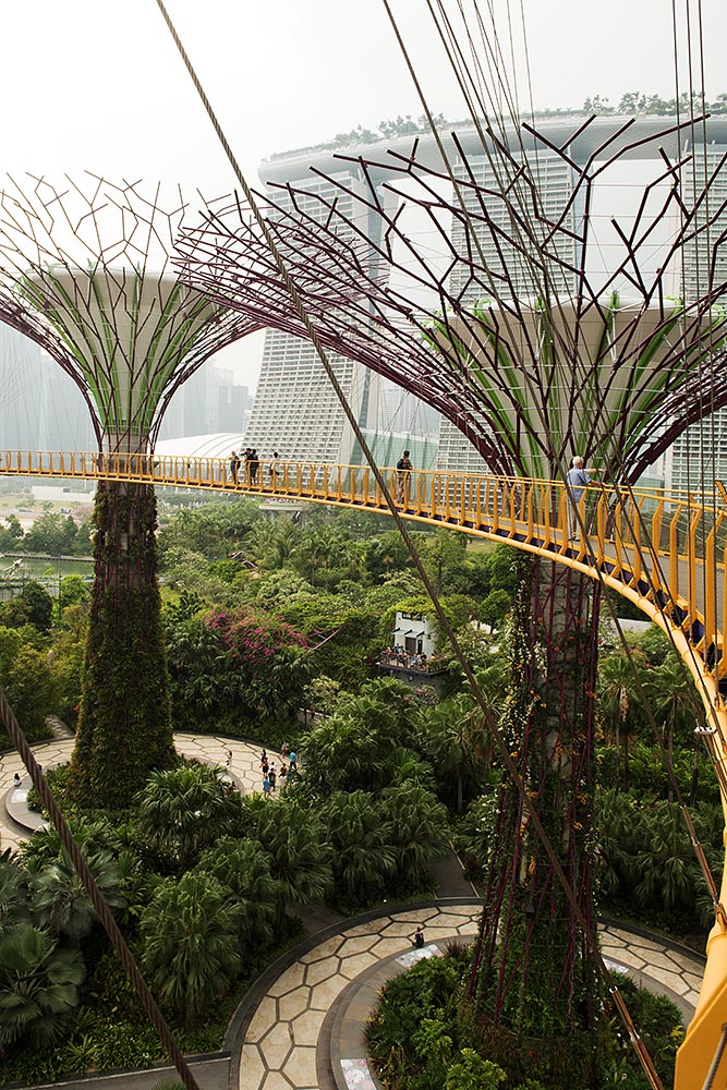 'Hiking' from Supertree to Supertree on the Skywalk at Gardens by the Bay