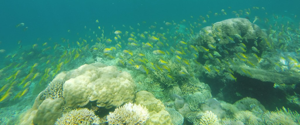 One of the most phenomenal experiences while snorkeling, swimming alongside a school of fish