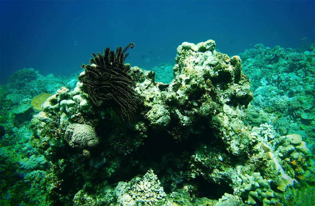 The reef off the shores of Binangkulan supports a number of unique creatures...