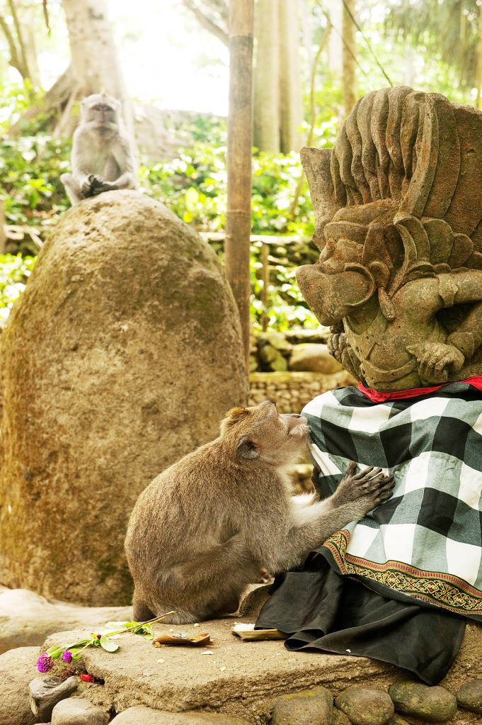 If ever in doubt that a monkey can feel emotion - this one was mourning the death of a family member, at a local shrine in Ubud, Bali