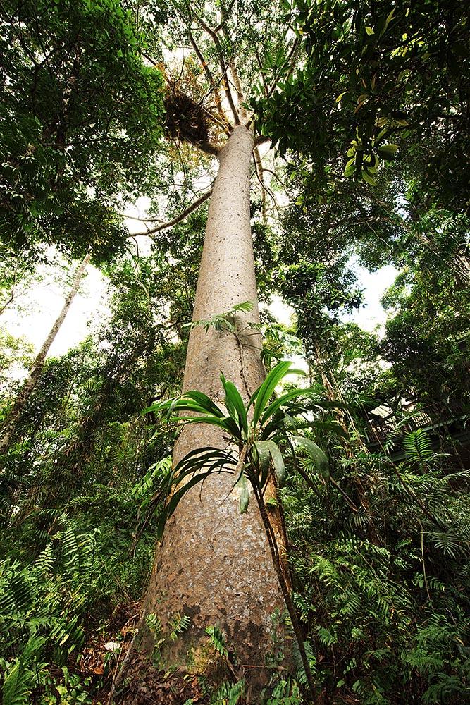 Looking skyward through the dense rainforest