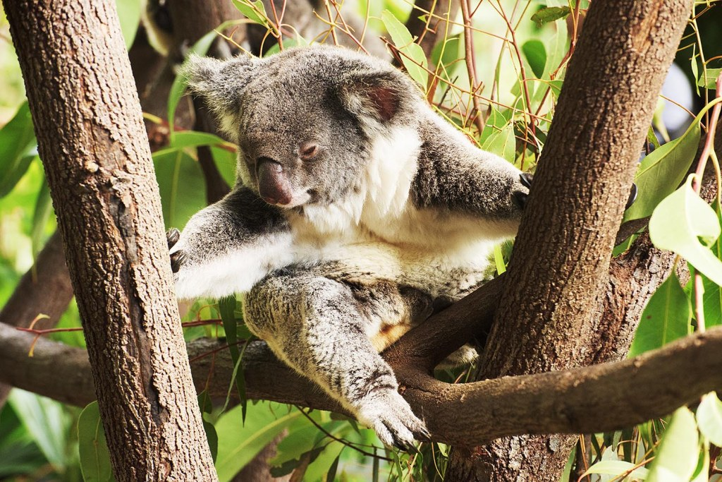 About as active as a koala gets..I am kind of jealous sometimes