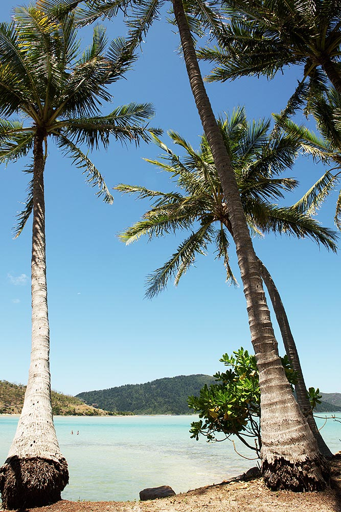 Ever-calming palm trees on Hayman Island