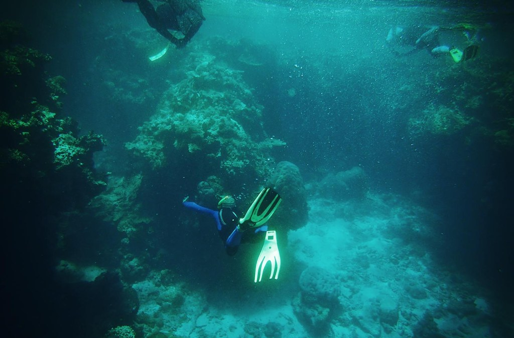 Free diving into the Outer Reef