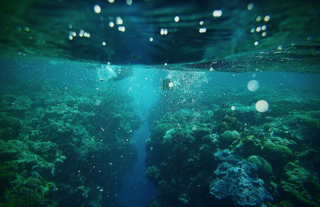 But snorkeling is still pretty damn cool here. Here, we navigate the incredible ?