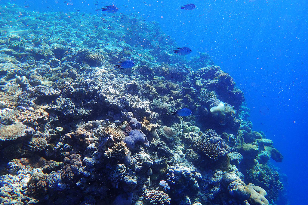 Into the Deep: Exploring the Great Barrier Reef